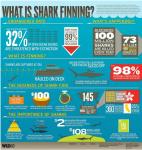 ailerons,requins,data visualisation,commerce,shark finning,mondial,intérêt économique,surpêche,soupe